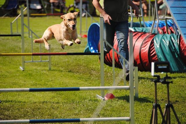 Bewertung im Hundesport